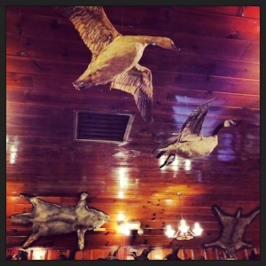 Just a few of the taxidermy collection items at the Mohawk.