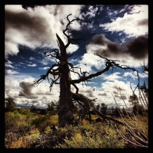 Crazy dead tree @ Craters of the Moon