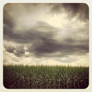 Another corn field?!