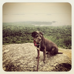 Trixie looking quite regal @ Mt Battie
