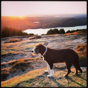 Portrait of Dax @ sunset on Cadillac Mountain
