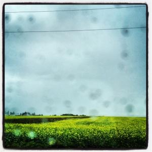 Rainy day on Prince Edward Island...