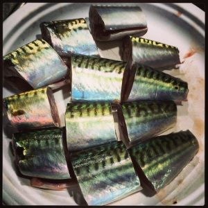 Fresh as you can get, mackerel.
