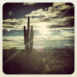 In the land of giant  cactus!
