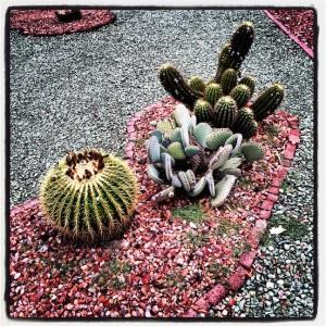 I like the little cactus