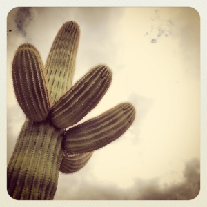 Big cactus are cool too